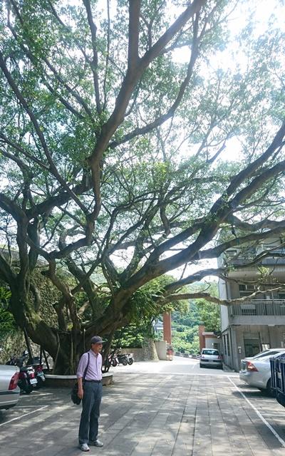 83歲的畠中爺爺回到當年的校園,看見記憶中庭園裡的小榕樹已經變成大樹,笑著說自己老了許多